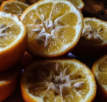 baked caramelized oranges recipe by rasoi menu