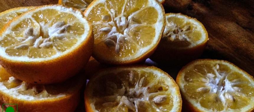 Baked Caramelized Oranges Recipe