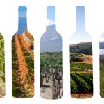 Rational Wine Experiment – The Horizontal Tasting