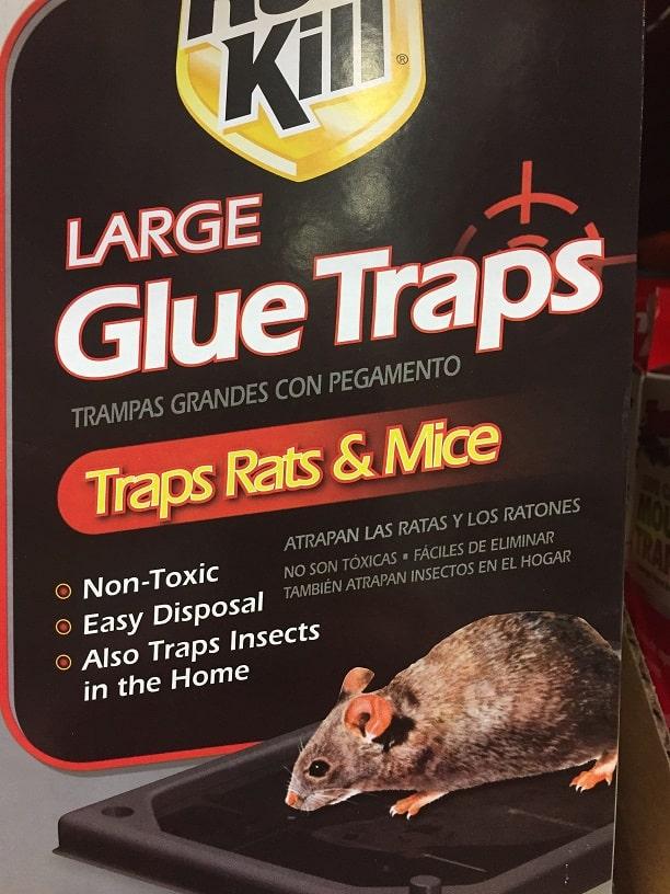 Glue Rat Traps