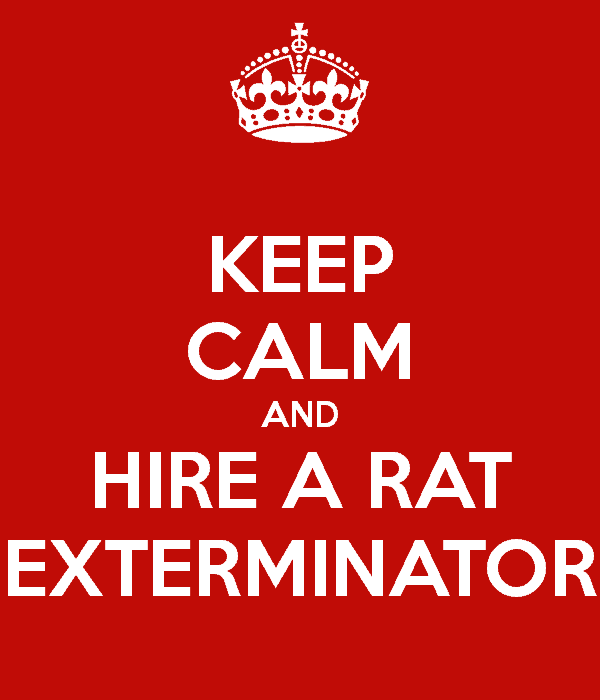 Rat Exterminator Cost: How Much for Rodent Removal and Control?