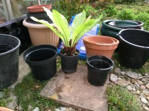 Creat an indoor garden