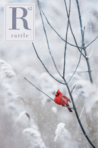 cover of issue 62, robin in snow