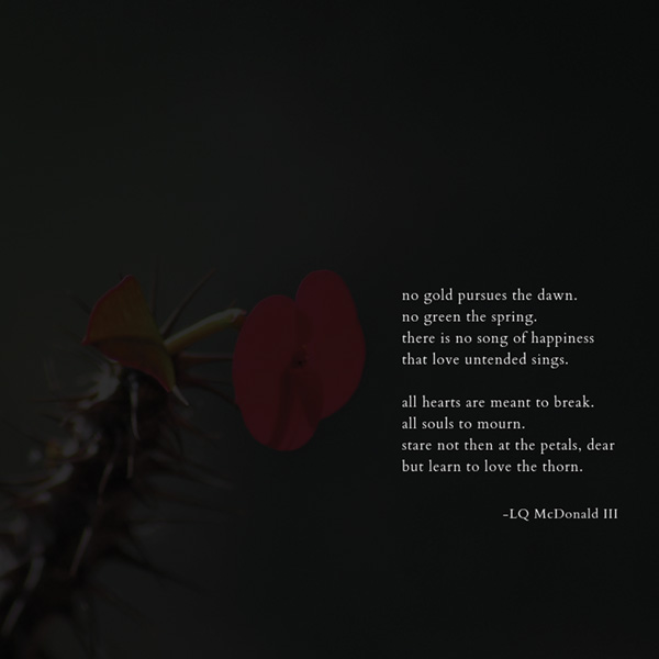dark flower with text: No gold pursues the dawn / no green the spring. / there is no song of happiness / that love untended sings