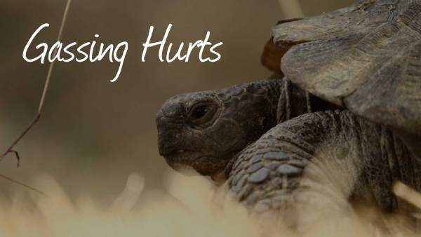 tortoise hero