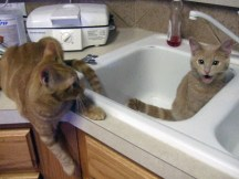 Riley and Malley in the Sink