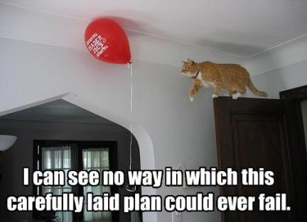 Cat does not plan