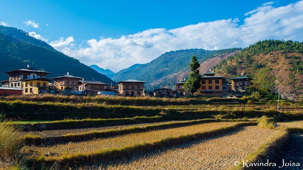 Chimi Lhakhang - Yowakha village farmland - Ravindra Joisa