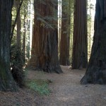Breathe In, Breathe Out: A Meditation With the Trees*