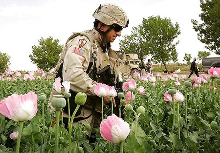 Opium fields in Afghanistan