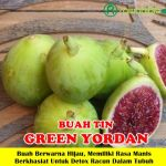 Bibit Tin Green Yordan