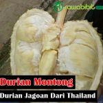 Durian Montong, si Jagoan Buah Durian Dari Negara Thailand