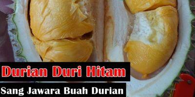 Sejarah Durian Duri Hitam