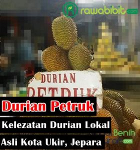 Sejarah Durian Petruk