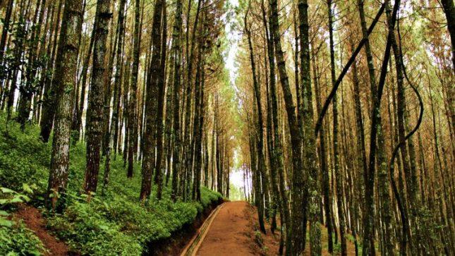 Tempat liburan di Bandung : Kawasan hutan pinus Bukit Moko