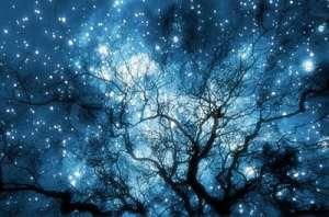 TreesStars