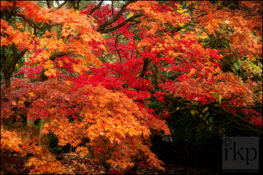 Autumn foliage in Denzell Gardens, Altrincham by Ray Kearney Photography