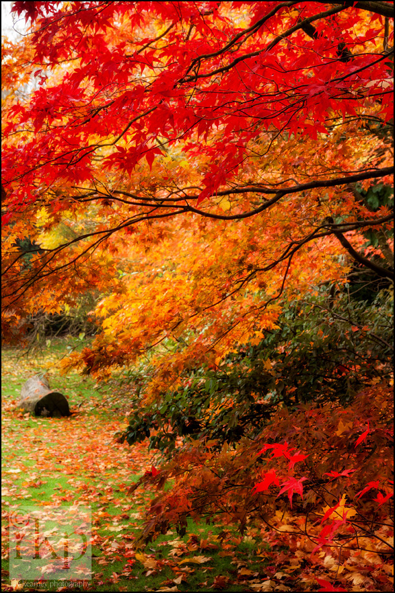 Autumn leaves in Denzell Gardens, Altrincham by Ray Kearney Photography