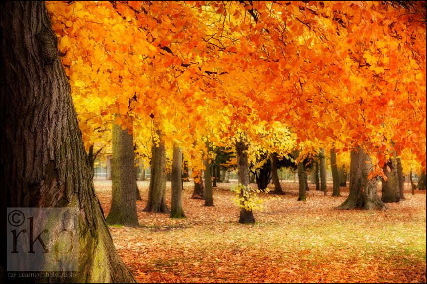 Autumn leaves in Longford Park Stretford 2