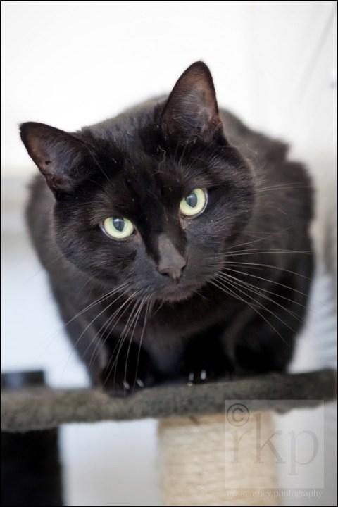 Black cat perching on post