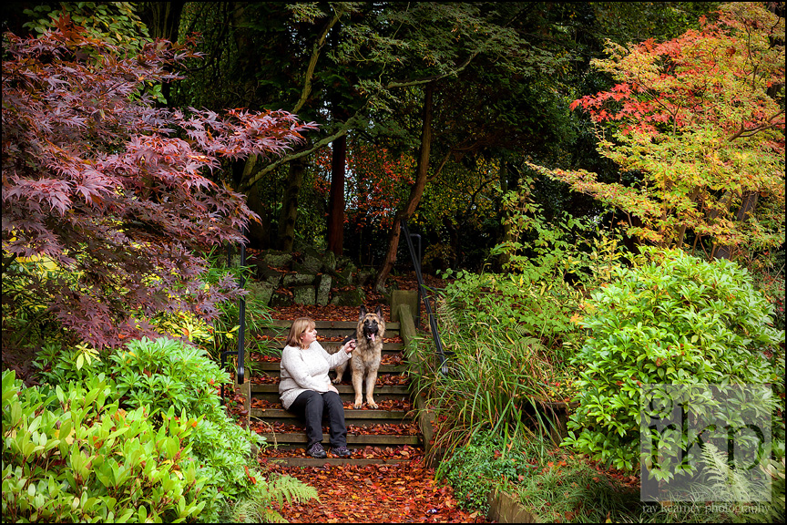 German Shepherd in autumn foliage in Denzell Gardens by Ray Kearney Photography