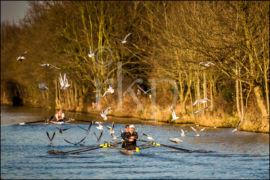 Trafford Rowing Club 060a