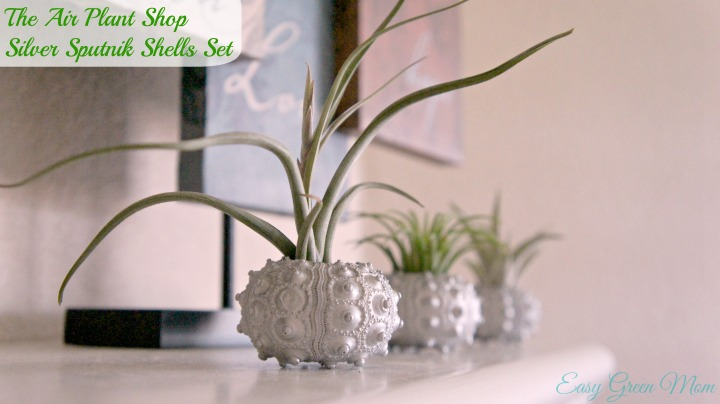 The Air Plant Shop Review