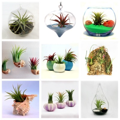 The Air Plant Shop displays