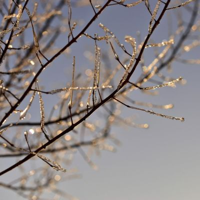 wet leafless branches in winter