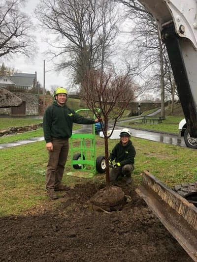 Rayzors Edge employees plant a tree in Connecticut