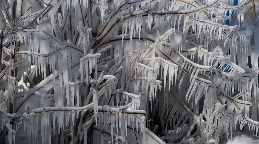 ice covers every inch of a tree or shrub, forming white icicles