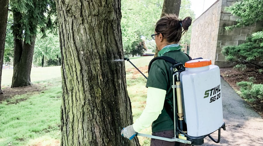 A Rayzors Edge Tree Service employee sprays for pest and disease control on a Connecticut tree