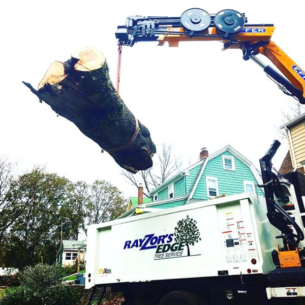 Rayzor's Edge tree Service crane moving a huge tree