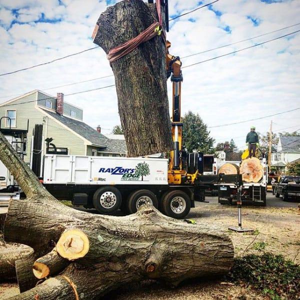 Rayzor's Edge crane lifting a huge tree