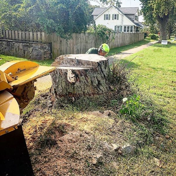 getting ready to remove a stump with a stump grinder
