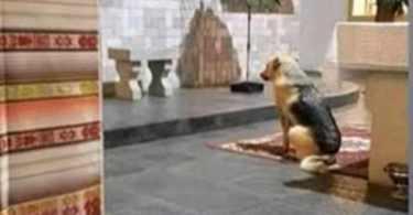 Perro de rescate reconoce a una persona viva en el Sagrario