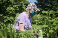 Dorothy Ball, of Brookfield, looks through the vegetables plant pots at the Brookfield Garden Club booth at the Brookfield Farmers Market on June 6, the first day of the 2020 market season in the parking lot of the village hall. (Alex Rogals/Staff Photographer)