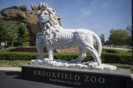 The statue of a lion that greets visitors as they walk through the South Gate at Brookfield Zoo has been outfitted with a face covering to reinforce that safety protocols are in place and need to be followed while guests are inside the park. (Alex Rogals/Staff Photographer)