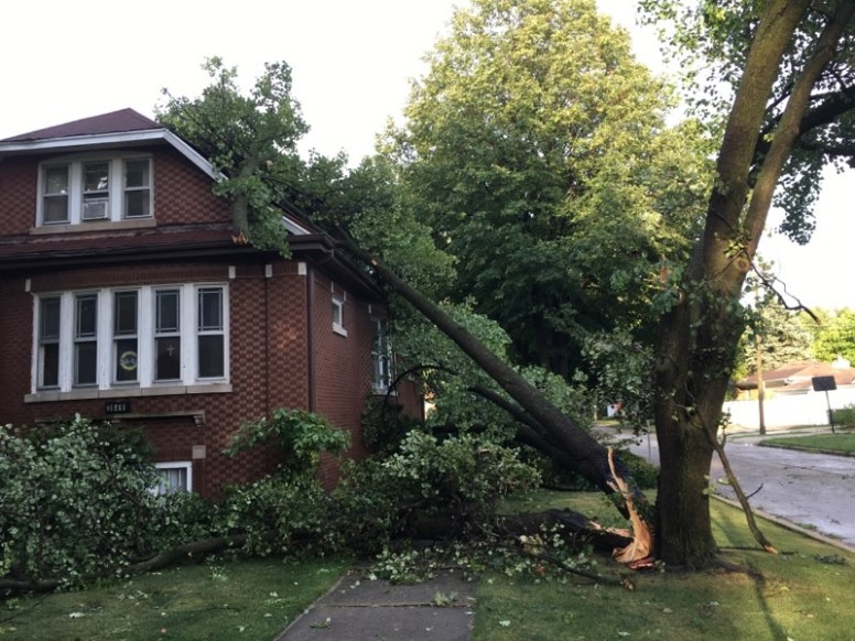 A Bradford pear tree in the 3600 block of Cleveland Avenue, Brookfield, split in the high winds that blew through the area Monday afternoon. | Photo courtesy of Victor Janusz