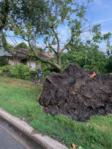 A large tree uprooted completely near the intersection of 2nd Avenue and 23rd Street in North Riverside, narrowly missing a house. | Photo courtesy of Tim Kutt