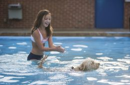 Dogs are seen swimming in the pool on Sept. 7, during the Dog Days of Summer dog swim at the Riverside Swim Club. (ALEX ROGALS/Staff Photographer)