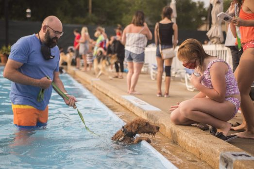 Dogs take a dip in the pool on Sept. 7, during the Dog Days of Summer dog swim at the Riverside Swim Club. (ALEX ROGALS/Staff Photographer)
