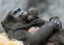 (Photo Jim Schulz/Chicago Zoological Society)