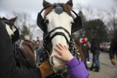 A youngster reaches up to pet the nose of one of the horses that drew Santa's carriage. (Chandler West/Staff photographer)