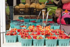 Fiona Stenson looks at raspberries for sale at the Jeffery Farms Inc. stand at the Brookfield farmers market on Saturday, June 13,2015. | Photo by Jennifer T. Lacey
