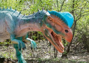 This Dilophosaurus is one of the many dinosaurs on display at Brookfield Zoo's Dinos and Dragons exhibit, which opens May 6. (Photo courtesy Chicago Zoological Society)
