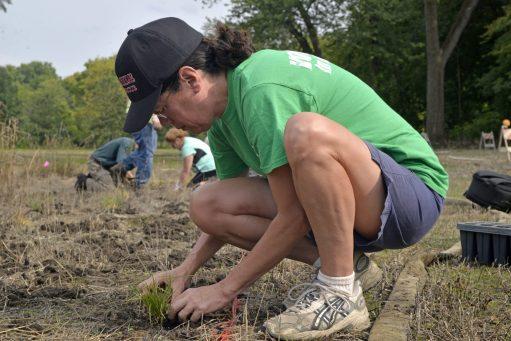 Jill Mateo, of Riverside, plants a tall grass species on Aug. 10, at Swan Pond. | Alexa Rogals/Staff Photographer