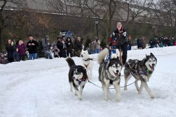 Brookfield Zoo hosts its annual FREEze Day - a free admission day featuring winter fun activities, including dogsledding demonstrations and more -- on Sunday, Feb. 11.