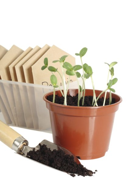 """North Riverside Public Library, 2400 Desplaines Ave., and the North Riverside Garden Club present """"Organic Gardening"""" on Wednesday, May 9 at 6:30 p.m."""