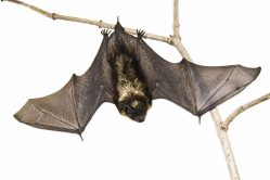 """North Riverside Public Library, 2400 Desplaines Ave., hosts the special program """"Incredible Bats"""" on Tuesday, Oct. 23 at 6:30 p.m."""